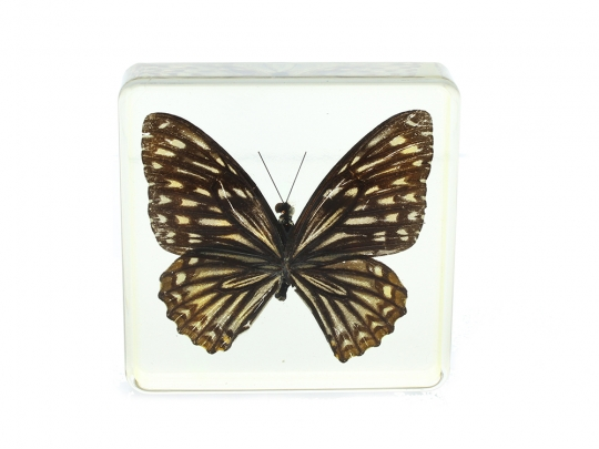 Lucite Treasures Plain Tiger Butterfly Paperweight 009fec76d