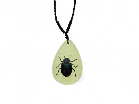 Insect Necklace Shining Blue Leaf Beetle with Lucky Red Seed Glow